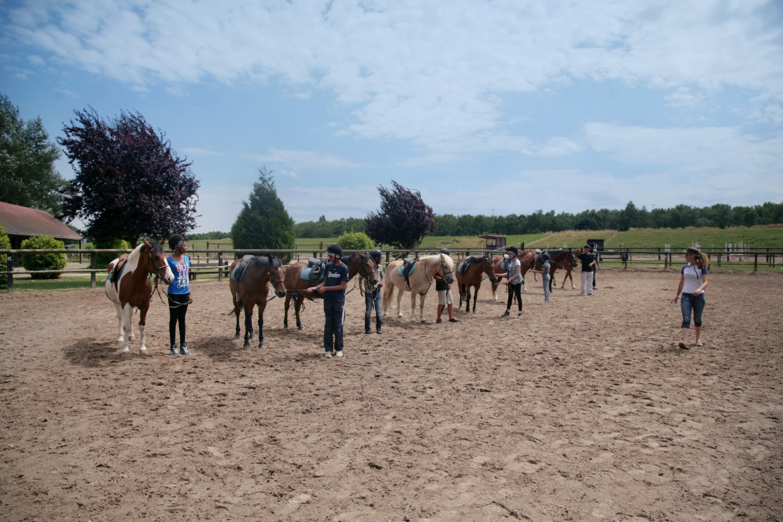 Journ e nationale du cheval 2016 le de loisirs 78 for Centre de loisirs 78